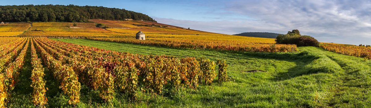 Discover the landscapes of Burgundy